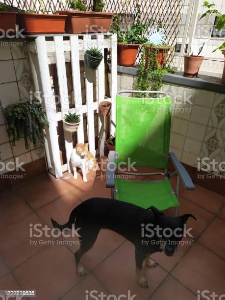 Cat and dog picture id1222226535?b=1&k=6&m=1222226535&s=612x612&h=dreti lcvyap7trs7lhflcqixahltg8n1ff2pcv2cro=
