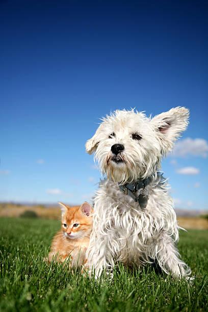 Cat and dog picture id146954280?b=1&k=6&m=146954280&s=612x612&w=0&h=wvcgn9a1vqxszeb3p1nd eryap2ijrjbag82a4xll5o=