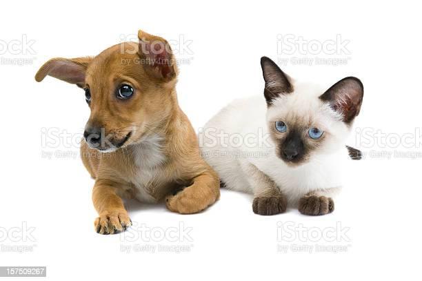 Cat and dog picture id157509267?b=1&k=6&m=157509267&s=612x612&h=l4v bra mnjixuez7g76s4jpejvcr6609mq3nmjisus=