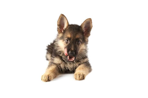 Cat and dog picture id157509434?b=1&k=6&m=157509434&s=612x612&w=0&h=t8kmau5labji5wt9dx39tu6yar8u3llmrr82xkv57q4=