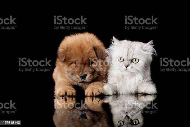 Cat and dog picture id157618140?b=1&k=6&m=157618140&s=612x612&h=bzblybgkheaozwmw2mzuut1qbf9 qkwx6e4qa85xyls=