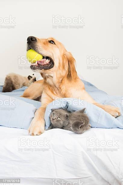 Cat and dog picture id171573213?b=1&k=6&m=171573213&s=612x612&h=0guxd8fws389bj6f9cizoh xcqf8vglkxqnlj mu9h0=