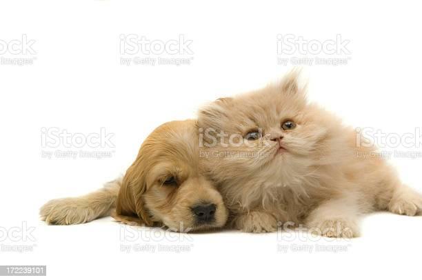 Cat and dog picture id172239101?b=1&k=6&m=172239101&s=612x612&h=aicjlfq4lmeg9uxrwzmzy4pyjkga2epo9izcyzbn9hg=