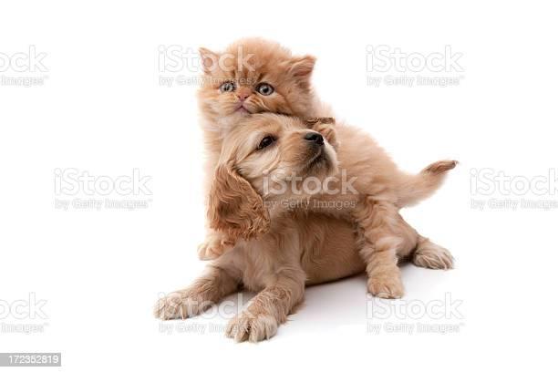 Cat and dog picture id172352819?b=1&k=6&m=172352819&s=612x612&h=au5va6kg1vj3vdrgeg6uvj9voaiem3on6ptgr6wa 1s=