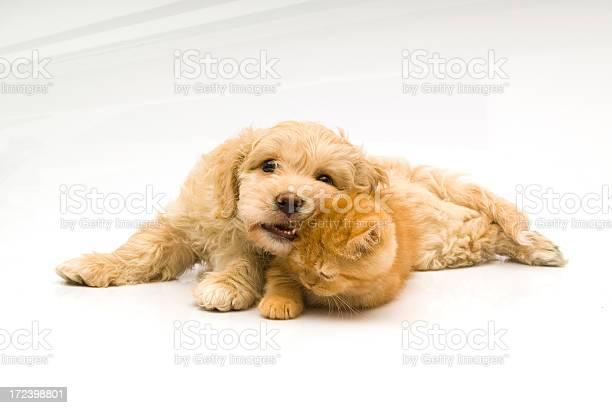 Cat and dog picture id172398801?b=1&k=6&m=172398801&s=612x612&h=thwd7xedwyrjmhde kxghlelhdpcbsizfk5f 8pq y4=