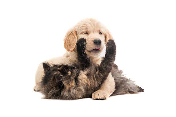 Cat and dog picture id172422726?b=1&k=6&m=172422726&s=612x612&w=0&h=hqu4yb eto mtrwptafsd3bovt9tawpikbvdcctfvk4=