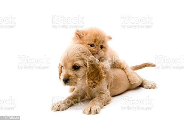 Cat and dog picture id172736333?b=1&k=6&m=172736333&s=612x612&h=otsxne5kmrpxe vyll25sxzawp29qxxaengz1osappw=