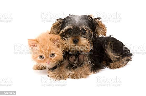 Cat and dog picture id172910540?b=1&k=6&m=172910540&s=612x612&h=i2o9wgs8tdlst76gskuavmgjn  n9x52ub1ya2nsixy=