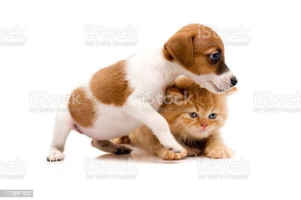 Cat and dog picture id172997502?b=1&k=6&m=172997502&s=612x612&h=ivqpom8vqi8ygja7kcbzz4 ynacrbyzfhdxcxhg0urs=