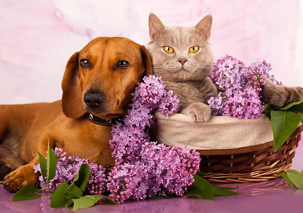 Cat and dog picture id178393748?b=1&k=6&m=178393748&s=612x612&w=0&h=lxza07ojn2actrafljov7jtrszpajqvv0023ztej1be=