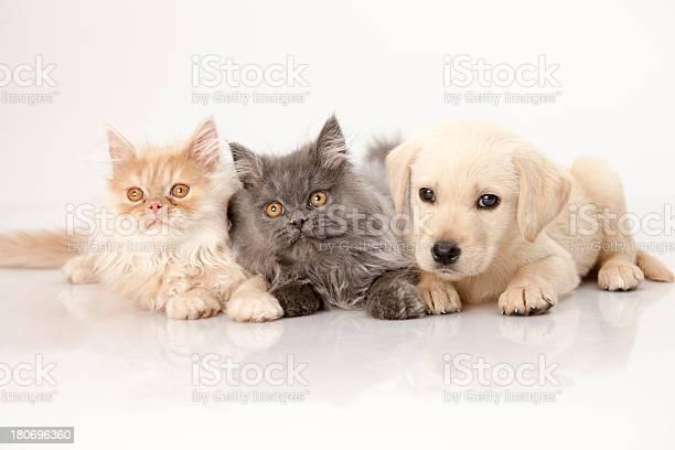 Cat and dog picture id180696360?b=1&k=6&m=180696360&s=612x612&h=jwhboqzp53slvcejnki5uqqyqnwwhlmrxvr5obvm4qc=
