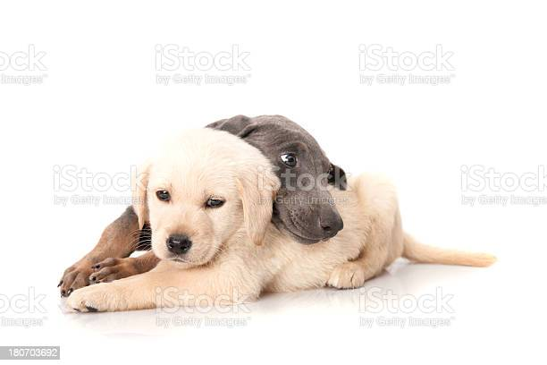 Cat and dog picture id180703692?b=1&k=6&m=180703692&s=612x612&h=jj5m yibfboookmjy2gbdtcpczwnmiclpdn5x bzl28=