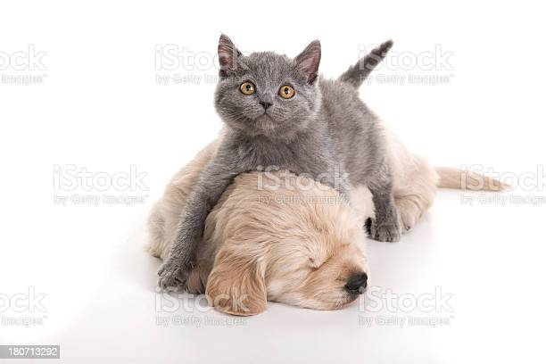 Cat and dog picture id180713292?b=1&k=6&m=180713292&s=612x612&h=qivssi78ugl67b gbyy4ffmequ2m9 wsqtj u jxoqw=