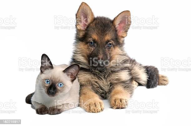 Cat and dog picture id182215917?b=1&k=6&m=182215917&s=612x612&h=m kyxdbh wadopduygouoe cwfgwjs2rzsryvy4vmoc=