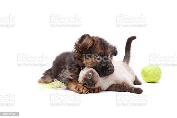 Cat and dog picture id182219611?b=1&k=6&m=182219611&s=612x612&h=st5qashdszsbrtyj1jxyujiupoml2oob8a3aj5ux0do=