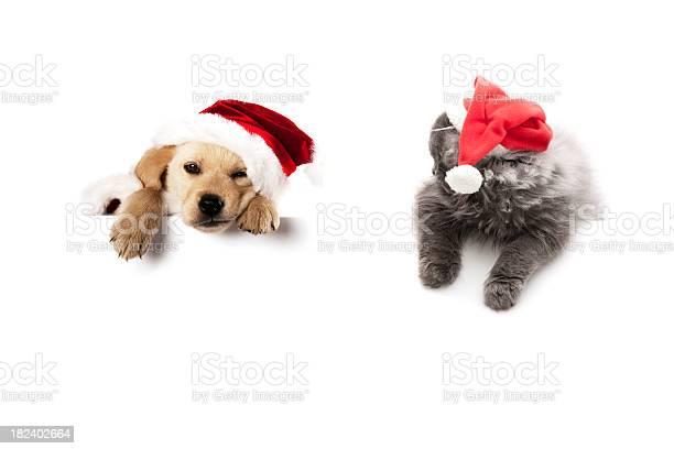 Cat and dog picture id182402664?b=1&k=6&m=182402664&s=612x612&h=v4ftvlin wpnqm7gyf rqaoouizt8zzfdcpiylhy5ss=