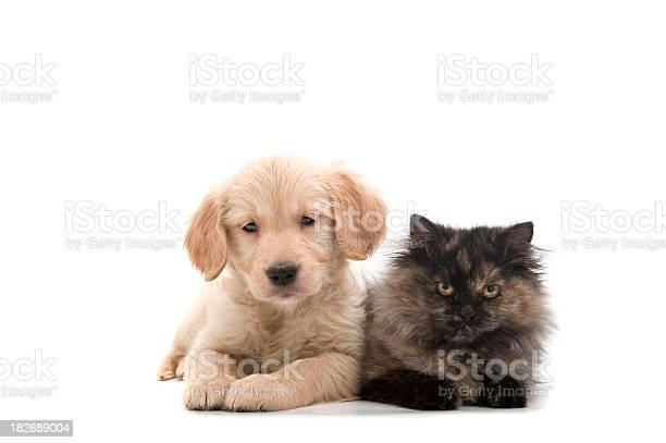 Cat and dog picture id182689004?b=1&k=6&m=182689004&s=612x612&h=ekn7tqohd ls7cf7dwu4wardpdwlgz26ivnywwkvgk0=