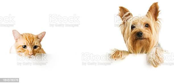 Cat and dog picture id184378376?b=1&k=6&m=184378376&s=612x612&h=8bnjdsrg5oserazjbzllx g2hbb10sqbb4nanxzf jm=