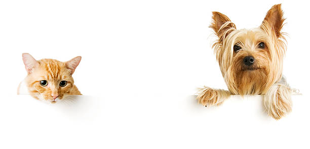 Cat and dog picture id184378376?b=1&k=6&m=184378376&s=612x612&w=0&h=gmvrvgbxkgjhjnb17g8qslcekeltf ammxclumq7354=