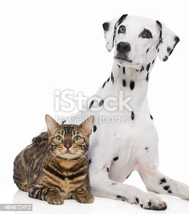 Dalmatian and Bengal cat