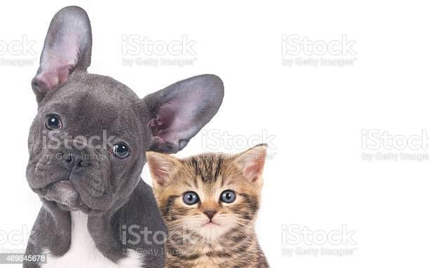 Cat and dog picture id469545678?b=1&k=6&m=469545678&s=612x612&h=4hj0fyk8dgi3od0oys35ezmdas2l7ukor4791ehhdfg=