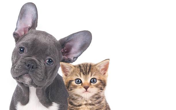 Cat and dog picture id469545678?b=1&k=6&m=469545678&s=612x612&w=0&h=yrptf9mqxs1eg yzcgverlwpimjpazjkrgqjfxskowm=