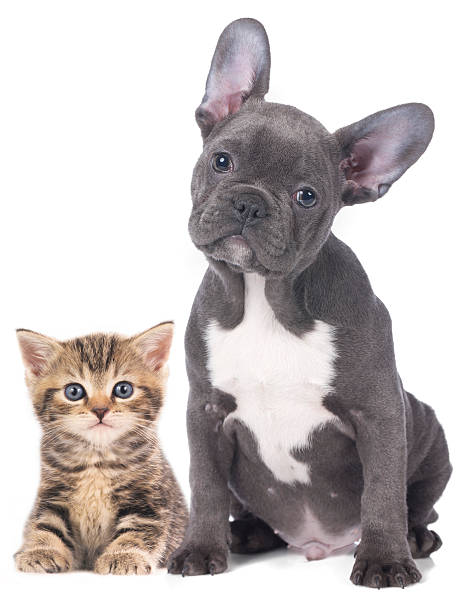 Cat and dog picture id469545728?b=1&k=6&m=469545728&s=612x612&w=0&h=zwsbvrsgx8clgqdpljj9dtrp5rt8gyb mrlxyxyzrke=