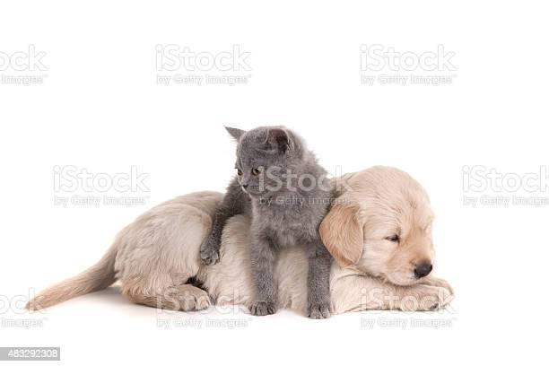 Cat and dog picture id483292308?b=1&k=6&m=483292308&s=612x612&h=mt joyo8if02jf0vrwg5mr6pe6huqwoddenz8q880h4=
