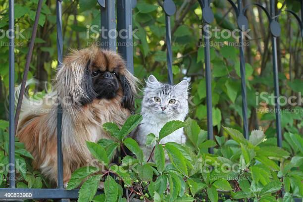 Cat and dog picture id490823960?b=1&k=6&m=490823960&s=612x612&h=ryvch itgqavwcq3az mugt8ioddtwmad2rczgfqnro=