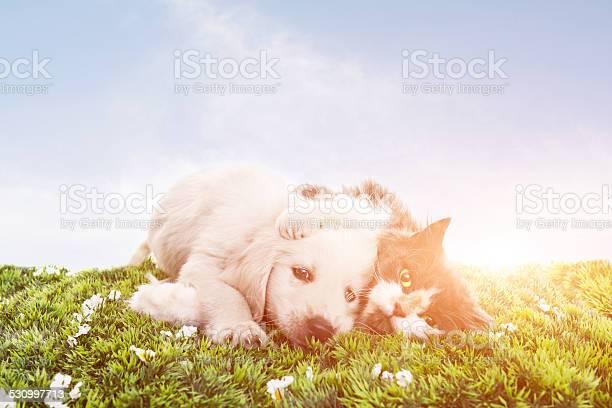 Cat and dog picture id530997713?b=1&k=6&m=530997713&s=612x612&h=zq d vs9czkxkqc9r4iiw ouktokzyvy1o7n4aud8dg=