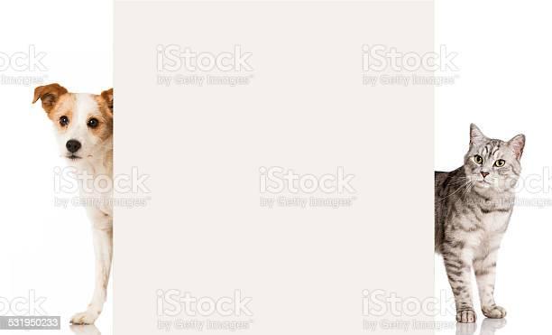 Cat and dog picture id531950233?b=1&k=6&m=531950233&s=612x612&h=yrjh6uj10xwksk5 uefdytfzgrosaymtlqin3 f2esw=