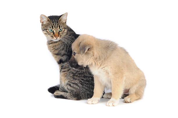 Cat and dog picture id535453019?b=1&k=6&m=535453019&s=612x612&w=0&h=jgzoq7gqxmr8f1azbsrpcytqtp6ypuaru ubhjhun7g=