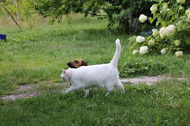 Cat and dog picture id584600622?b=1&k=6&m=584600622&s=612x612&w=0&h=4j2ioljvrsuctmfczx6ymar  ylzvcrlhgfwkmb03d0=