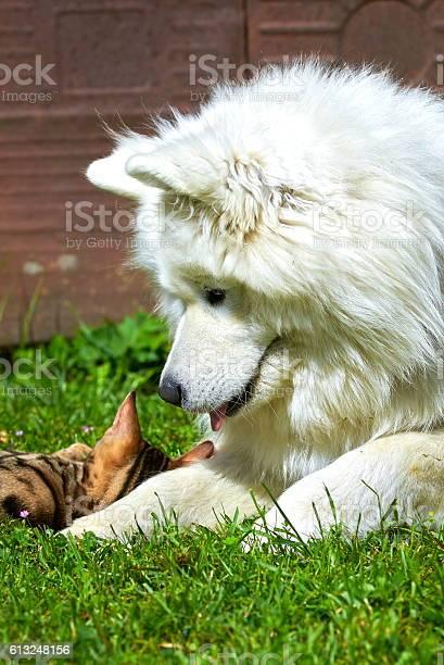 Cat and dog picture id613248156?b=1&k=6&m=613248156&s=612x612&h=ccxi2w1wpvi847e57x7li16u0dws2sno tiksujshlw=