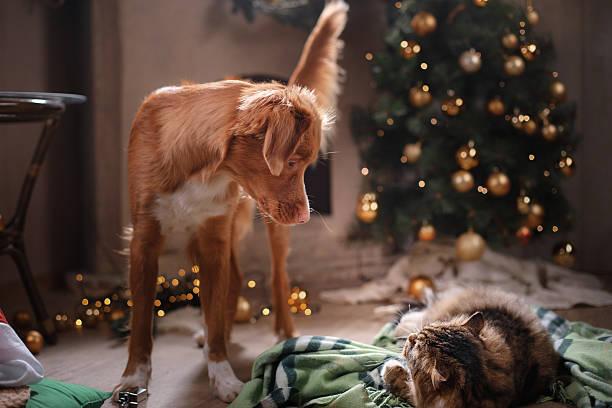 katze und hund  - katze weihnachten stock-fotos und bilder