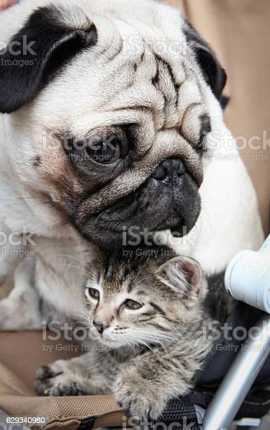 Cat and dog picture id629340980?b=1&k=6&m=629340980&s=612x612&h=ppikpjsnai0b07emo2j2hjmumpm vw0qexm pfpx9z4=
