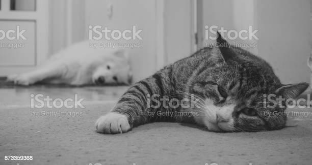 Cat and dog picture id873359368?b=1&k=6&m=873359368&s=612x612&h=qb0iltfjsgytix646lnvlt49xn olqj0nhrjiesi3r0=