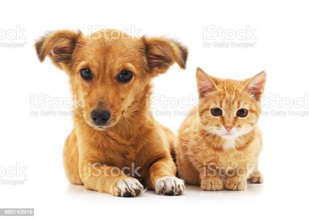 Cat and dog picture id895743916?b=1&k=6&m=895743916&s=612x612&h=a5jnnaax9hhttsopzbttny cxix59zvt5yvwojqhkb8=