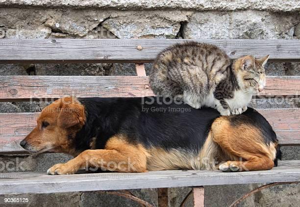 Cat and dog picture id90365125?b=1&k=6&m=90365125&s=612x612&h= q3jp67podgntgynbzw1yeqs6dk3jtljsiketshoujq=