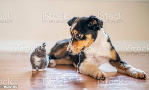 Cat and dog playing stock photo picture id1180024480?b=1&k=6&m=1180024480&s=612x612&h=gtgba56hiqss6bqjo8wdhad2nsgyuutzavzzg91323c=