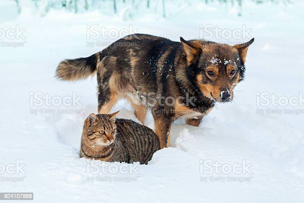Cat and dog playing together on the snow in winter picture id624107888?b=1&k=6&m=624107888&s=612x612&h=fk64wvnh7ykpnp1wgyu rnauhsgmne45emjgt1gyixo=