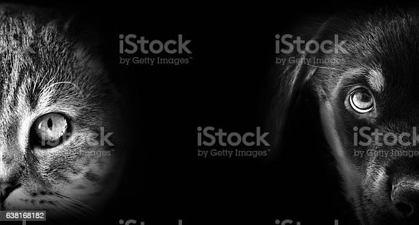 Cat and dog portrait in dark picture id638168182?b=1&k=6&m=638168182&s=612x612&h=gmawmy2gpubfey6uf0 q7zgvrumbs9ul yn9q 4kptu=