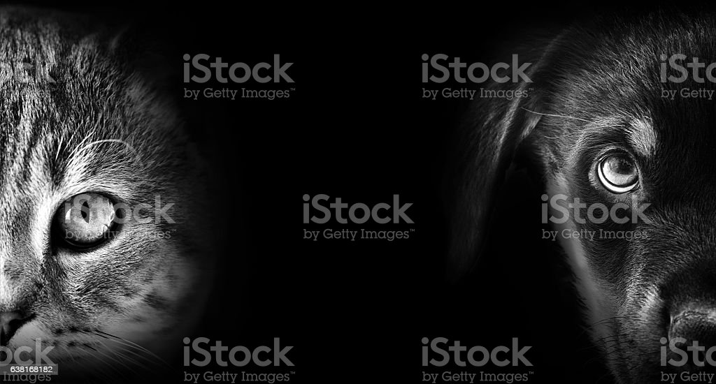cat and dog portrait in dark stock photo