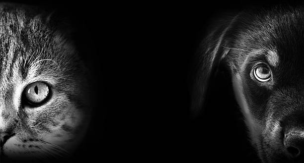 cat and dog portrait in dark Taken by Nikon snout stock pictures, royalty-free photos & images