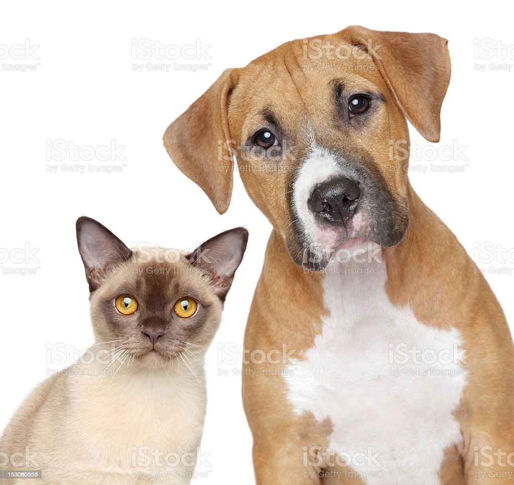 Cat and Dog portrait on a white background royalty-free stock photo
