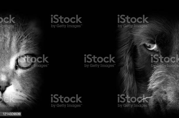 Cat and dog portraits picture id1214326539?b=1&k=6&m=1214326539&s=612x612&h=2zvb78oy2xnhronxd9jbyt6xrrppsotufk2mcqknsym=