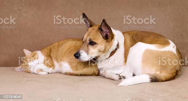 Cat and dog resting together on sofa best friends picture id1227318242?b=1&k=6&m=1227318242&s=612x612&h=ls8wuejvaj3la8q5t2v9wwikd8azl3b0ylsdl5mgwli=