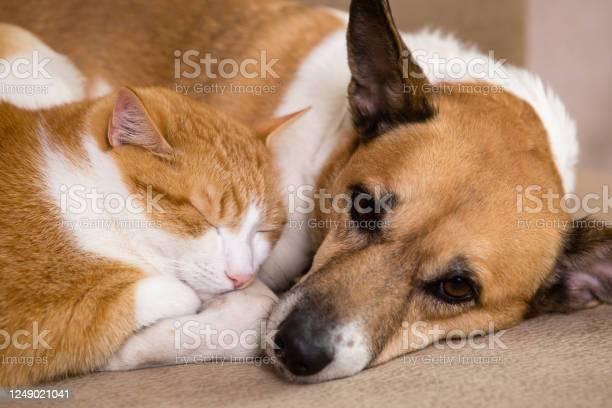 Cat and dog resting together on sofa best friends picture id1249021041?b=1&k=6&m=1249021041&s=612x612&h=xi1indwar1kvokq6 ksohgsm4dzawekl7iikpdiwykm=