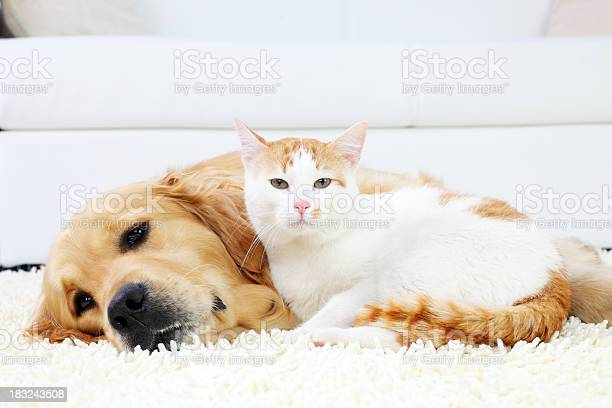 Cat and dog resting together picture id183243508?b=1&k=6&m=183243508&s=612x612&h=vl2bakvddscs3midfayruaidygor  6nksrswhdm3go=