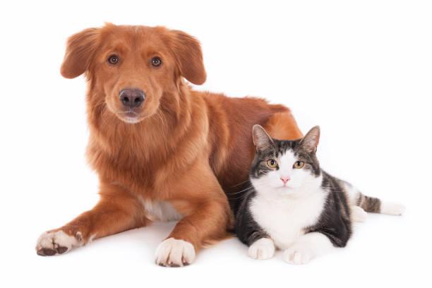 Cat and dog side by side picture id638575284?b=1&k=6&m=638575284&s=612x612&w=0&h=z2cw3eduzrbztkv4xij5 fmdfpuzsjk9pkblk5kli0y=